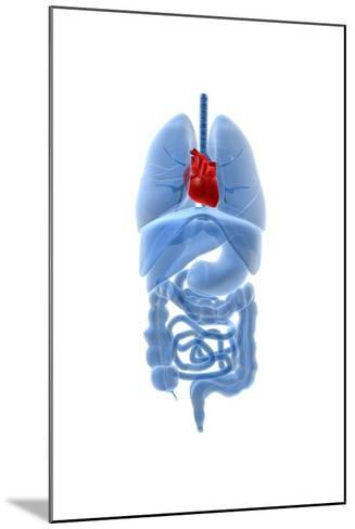 X-Ray Image of Internal Organs with Heart Highlighted in Red--Mounted Art Print
