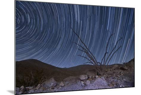 An Octotillo Backdropped by Star Tails in Anza Borrego Desert State Park--Mounted Photographic Print