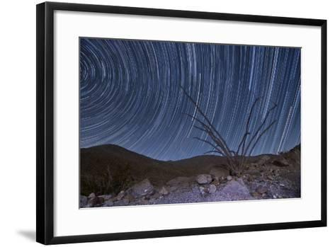 An Octotillo Backdropped by Star Tails in Anza Borrego Desert State Park--Framed Art Print