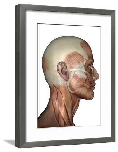 Human Anatomy of Male Facial Muscles, Profile View--Framed Art Print