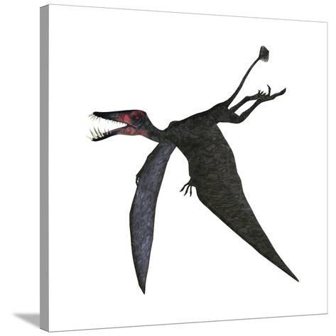 Dorygnathus, a Genus of Pterosaur from the Jurassic Period--Stretched Canvas Print
