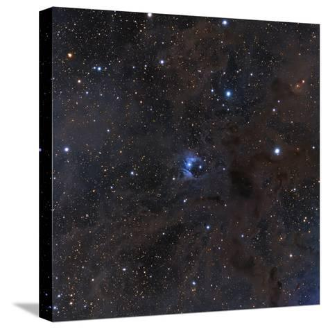 The Bright Star Vdb 16, Dust and Nebulosity in the Constellation Aries--Stretched Canvas Print
