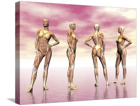 Female Muscular System from Four Points of View--Stretched Canvas Print