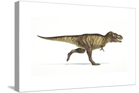 Tyrannosaurus Rex Dinosaur on White Background--Stretched Canvas Print