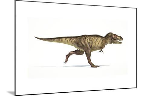 Tyrannosaurus Rex Dinosaur on White Background--Mounted Art Print