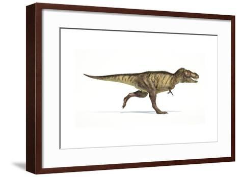 Tyrannosaurus Rex Dinosaur on White Background--Framed Art Print