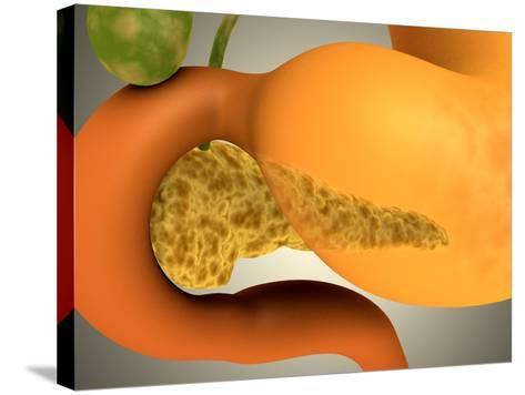 Conceptual Image of Human Pancreas and Stomach--Stretched Canvas Print