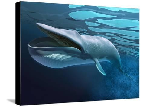 Blue Whale Underwater with Caustics on Surface--Stretched Canvas Print