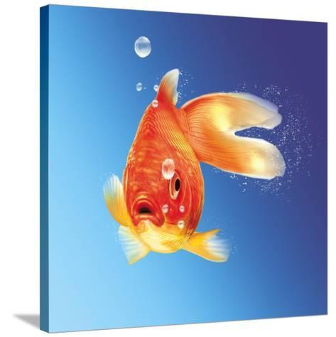 Goldfish with Water Bubbles--Stretched Canvas Print
