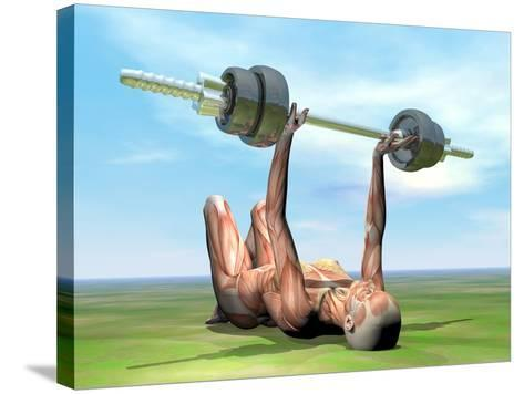 Female Musculature Exercising with a Dumbbell--Stretched Canvas Print