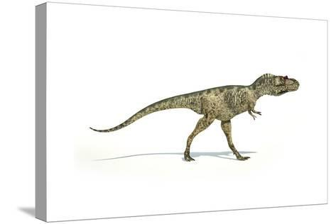 Albertosaurus Dinosaur on White Background--Stretched Canvas Print