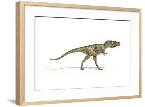 Albertosaurus Dinosaur on White Background--Framed Art Print