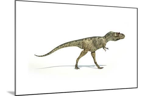 Albertosaurus Dinosaur on White Background--Mounted Art Print