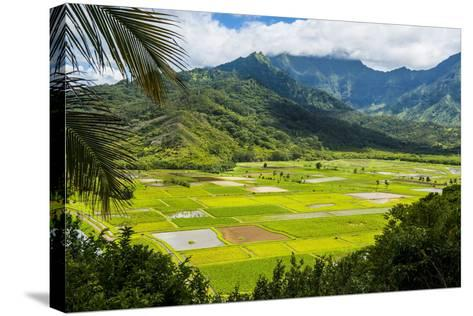 Taro Fields Near Hanalei on the Island of Kauai, Hawaii, United States of America, Pacific-Michael Runkel-Stretched Canvas Print