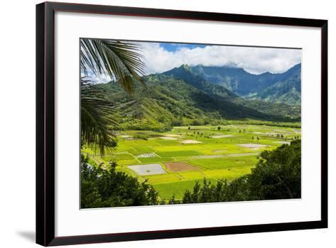 Taro Fields Near Hanalei on the Island of Kauai, Hawaii, United States of America, Pacific-Michael Runkel-Framed Art Print