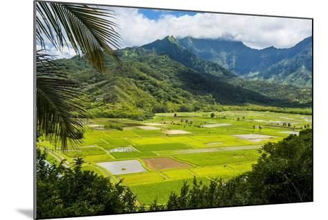 Taro Fields Near Hanalei on the Island of Kauai, Hawaii, United States of America, Pacific-Michael Runkel-Mounted Photographic Print