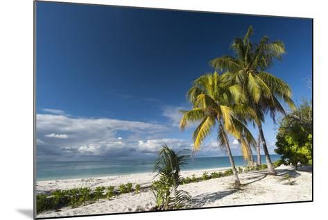 Denis Island, Seychelles, Indian Ocean, Africa-Sergio Pitamitz-Mounted Photographic Print