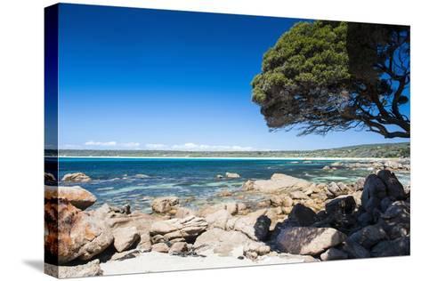 Rocky Cliffs on Shelley Cove Near Eagle Bay, Western Australia, Australia, Pacific-Michael Runkel-Stretched Canvas Print