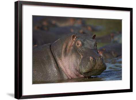 Hippopotamus (Hippopotamus Amphibius), Serengeti National Park, Tanzania, East Africa, Africa-James Hager-Framed Art Print