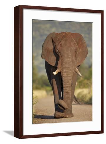 African Elephant (Loxodonta Africana), Kruger National Park, South Africa, Africa-James Hager-Framed Art Print