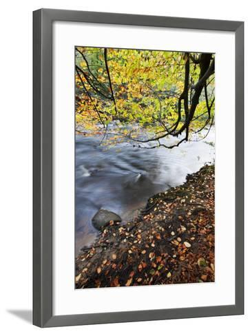 Fallen Leaves and Tree Overhanging the River Nidd in Nidd Gorge in Autumn-Mark Sunderland-Framed Art Print
