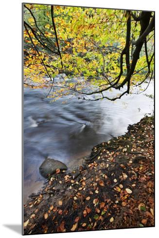 Fallen Leaves and Tree Overhanging the River Nidd in Nidd Gorge in Autumn-Mark Sunderland-Mounted Photographic Print