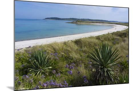 Beach on Tresco Island, Scilly Isles, United Kingdom, Europe-Peter Groenendijk-Mounted Photographic Print