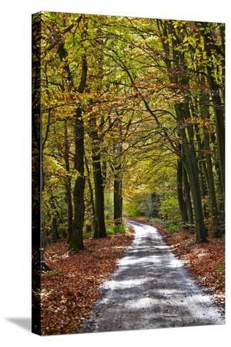 Burnham Beeches, Buckinghamshire, England, United Kingdom, Europe-Mark Mawson-Stretched Canvas Print