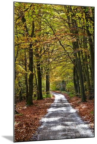 Burnham Beeches, Buckinghamshire, England, United Kingdom, Europe-Mark Mawson-Mounted Photographic Print