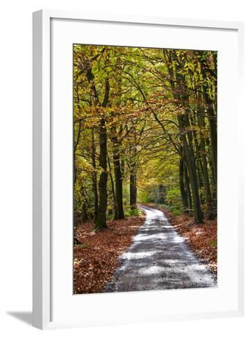 Burnham Beeches, Buckinghamshire, England, United Kingdom, Europe-Mark Mawson-Framed Art Print