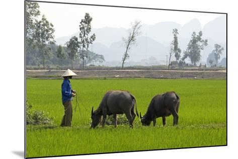 Tam Coc, Ninh Binh Area, Vietnam, Indochina, Southeast Asia, Asia-Bruno Morandi-Mounted Photographic Print