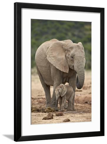 African Elephant (Loxodonta Africana) Mother and Baby-James Hager-Framed Art Print
