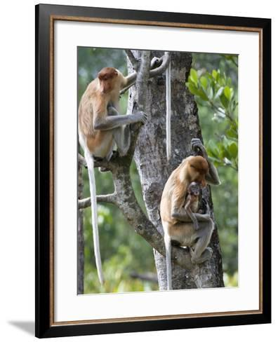 Adult Female Proboscis Monkey (Nasalis Larvatus)-Louise Murray-Framed Art Print