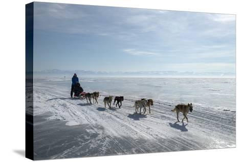 Visitors Enjoying Dog Sledding-Louise Murray-Stretched Canvas Print