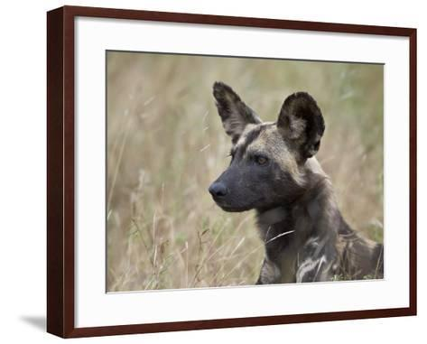 African Wild Dog (African Hunting Dog) (Cape Hunting Dog) (Lycaon Pictus)-James Hager-Framed Art Print