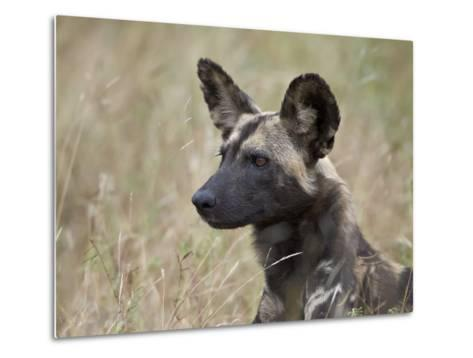 African Wild Dog (African Hunting Dog) (Cape Hunting Dog) (Lycaon Pictus)-James Hager-Metal Print