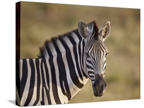 Common Zebra (Plains Zebra) (Burchell's Zebra) (Equus Burchelli)-James Hager-Stretched Canvas Print