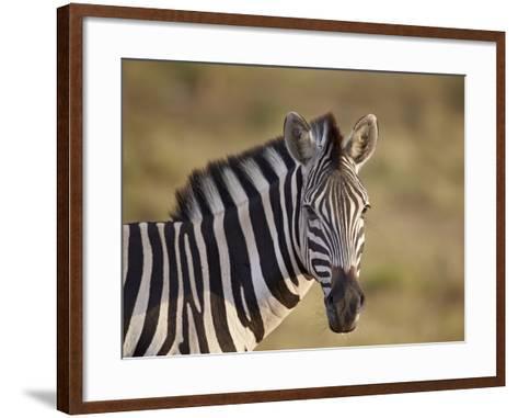 Common Zebra (Plains Zebra) (Burchell's Zebra) (Equus Burchelli)-James Hager-Framed Art Print