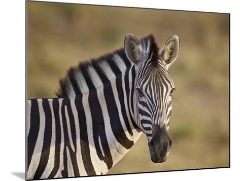 Common Zebra (Plains Zebra) (Burchell's Zebra) (Equus Burchelli)-James Hager-Mounted Photographic Print