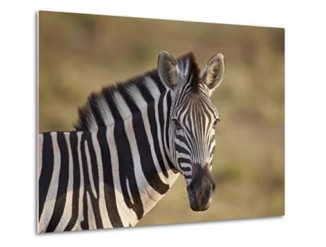 Common Zebra (Plains Zebra) (Burchell's Zebra) (Equus Burchelli)-James Hager-Metal Print