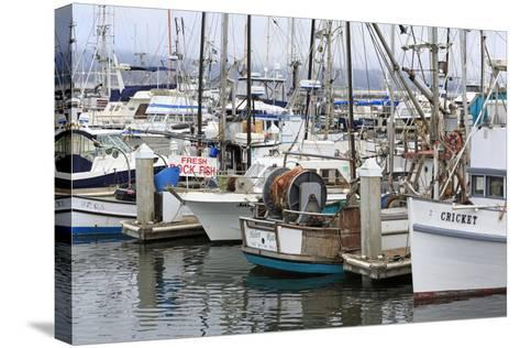 Marina in Pillar Point Harbor, Half Moon Bay, California, United States of America, North America-Richard Cummins-Stretched Canvas Print