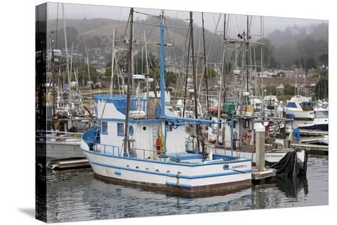 Marina in Pillar Point Harbor, Half Moon Bay, California, United States of America, North America-Richard Cummins-Stretched Canvas Print
