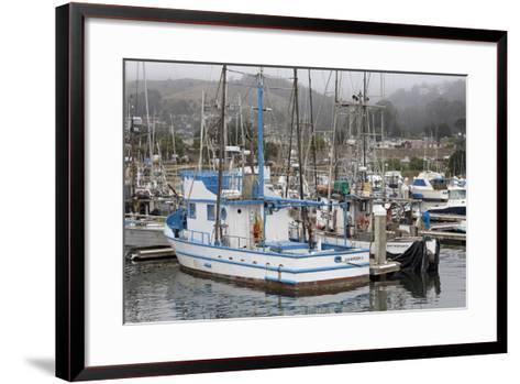 Marina in Pillar Point Harbor, Half Moon Bay, California, United States of America, North America-Richard Cummins-Framed Art Print