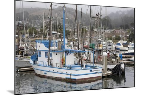 Marina in Pillar Point Harbor, Half Moon Bay, California, United States of America, North America-Richard Cummins-Mounted Photographic Print