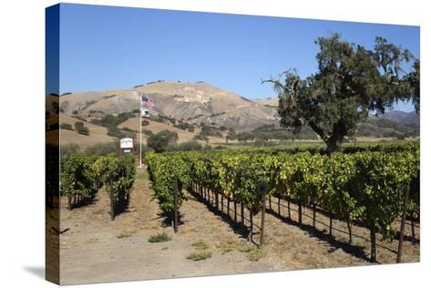 Zaca Mesa Winery and Vineyards-Stuart Black-Stretched Canvas Print