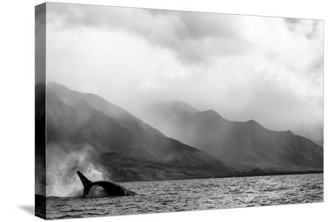 A Humpback Whale Flips its Tail in the Pacific Ocean-Ralph Lee Hopkins-Stretched Canvas Print