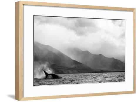 A Humpback Whale Flips its Tail in the Pacific Ocean-Ralph Lee Hopkins-Framed Art Print