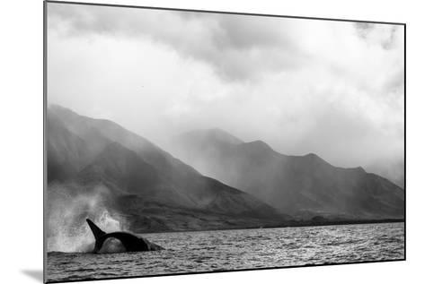 A Humpback Whale Flips its Tail in the Pacific Ocean-Ralph Lee Hopkins-Mounted Photographic Print