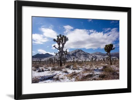 Joshua Trees and Snow Covered Mountains in Southern California-Ben Horton-Framed Art Print