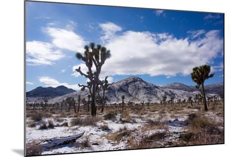 Joshua Trees and Snow Covered Mountains in Southern California-Ben Horton-Mounted Photographic Print